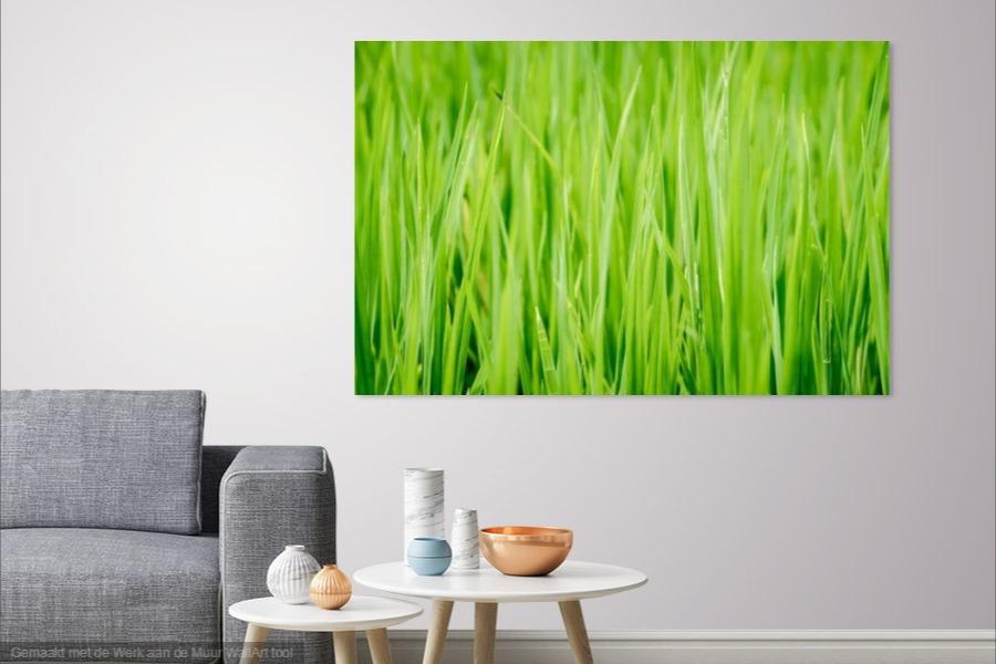 Rijstplantjes in Thailand